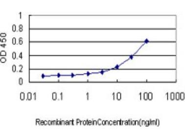 NM23-H1 Antibody (2H1)