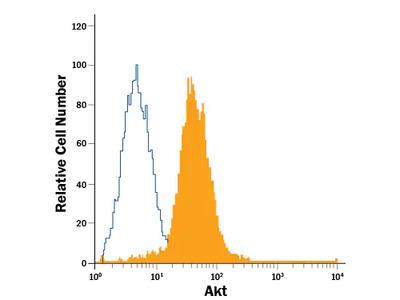 Human / Mouse / Rat Akt Pan Specific PE-conjugated Antibody