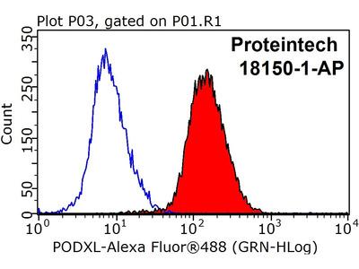 Podocalyxin antibody