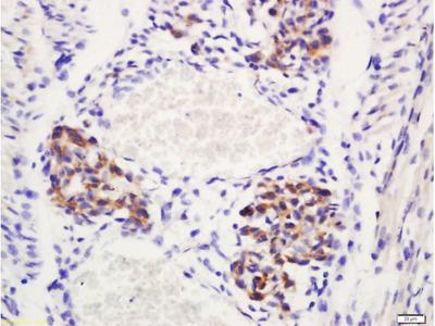 Delta 4 Antibody