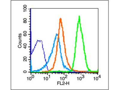 NKG2D Antibody, Biotin Conjugated