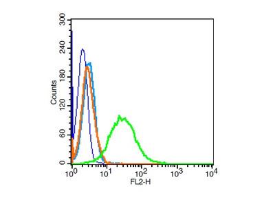 Vimentin Polyclonal Antibody, HRP Conjugated