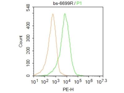 TIAM1 Polyclonal Antibody