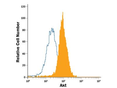 Human / Mouse / Rat Akt Pan Specific APC-conjugated Antibody