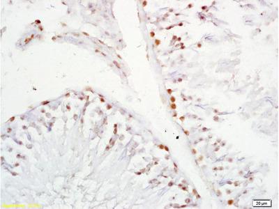XAGE2 Antibody