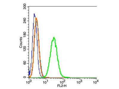 Tubulin-beta Antibody, HRP Conjugated