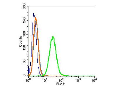 Tubulin-beta Antibody, Cy3 Conjugated