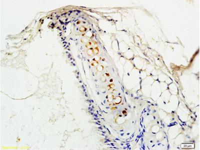 PAFR Antibody, Cy3 Conjugated