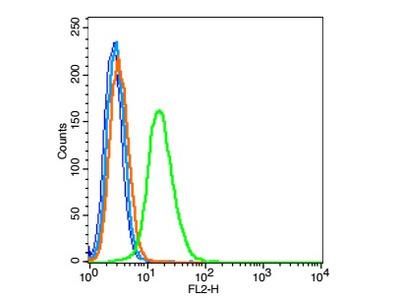 TTF1 Antibody, HRP Conjugated