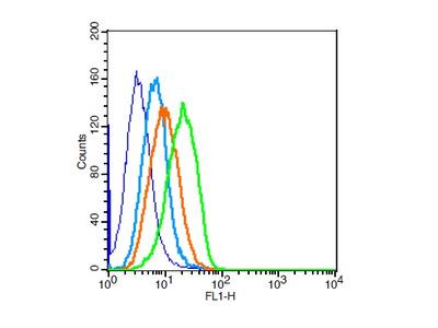 Cardiac Troponin I Antibody, Cy5.5 Conjugated
