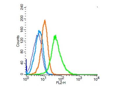 CD34 Antibody, Cy5 Conjugated
