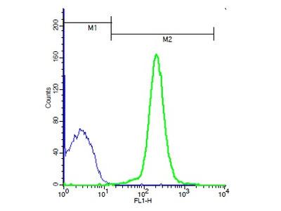LSP1 (Ser204) Antibody