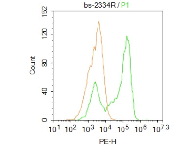 PXR Antibody, Cy7 Conjugated