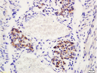 Delta 4 Antibody, Biotin Conjugated