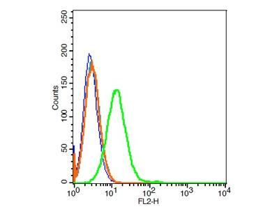CD21/EBV receptor Polyclonal Antibody, Cy3 Conjugated