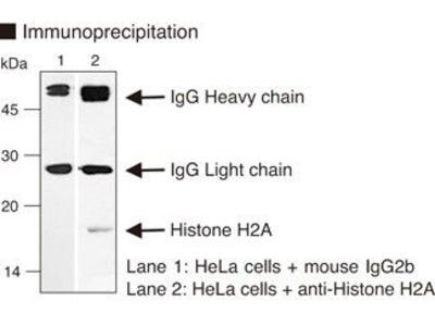 Anti-Histone H2A mAb