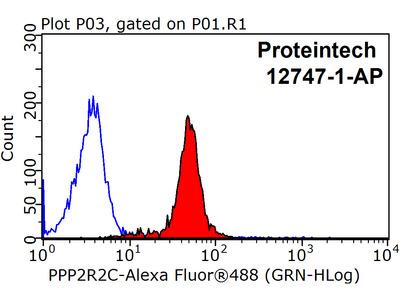 PPP2R2C Antibody
