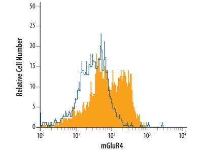 mGluR4 Antibody