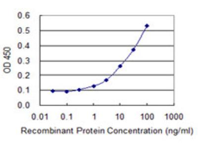 NIX / BNIP3L Monoclonal Antibody