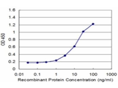 PURA / Pur-Alpha Monoclonal Antibody