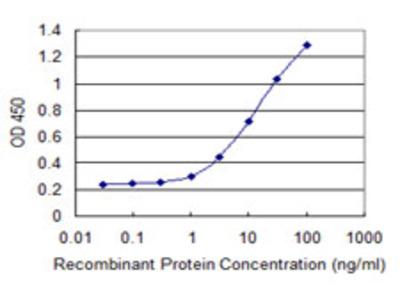 CPSF6 Monoclonal Antibody