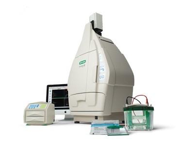V3 Western Workflow From Bio Rad Biocompare Com