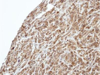 PI3K p55 gamma Polyclonal Antibody