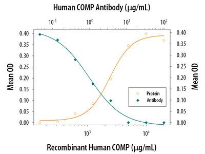 COMP /Thrombospondin-5 Antibody