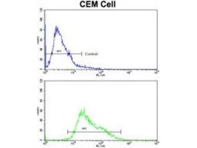 Anti-AMHR2 antibody, C-term