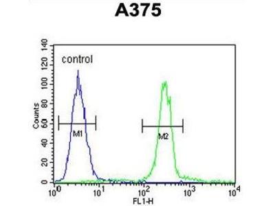 Anti-CTHRC1 antibody, N-term