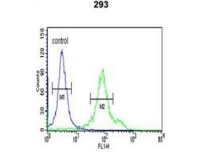 Anti-CYP27B1 antibody, C-term