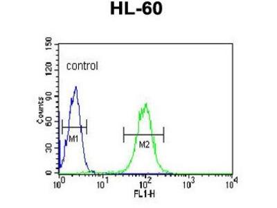Anti-BPI antibody, Internal