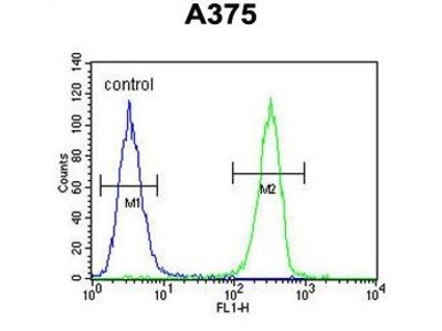 Anti-HOXA9 antibody, C-term