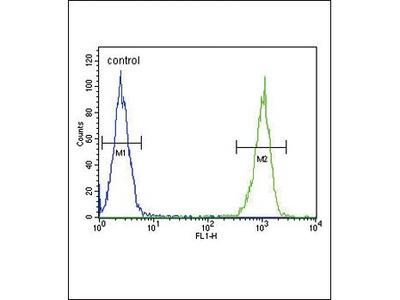 Anti-Lactoferrin antibody