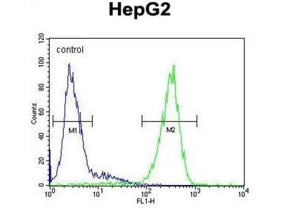 Anti-FUCA1 antibody, Internal