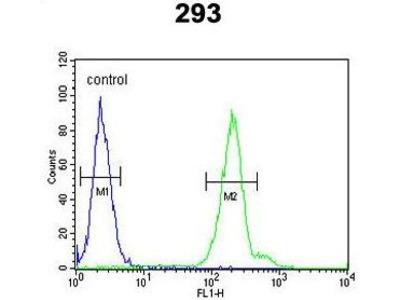 Anti-CRELD2 antibody, C-term