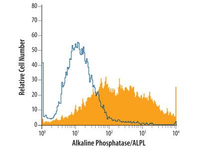 Mouse Alkaline Phosphatase / ALPL Antibody
