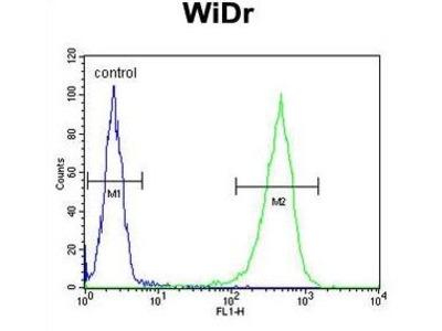 Anti-CCDC3 antibody, C-term