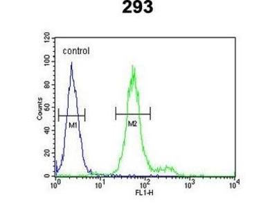 Anti-ADAMTS18 antibody, C-term