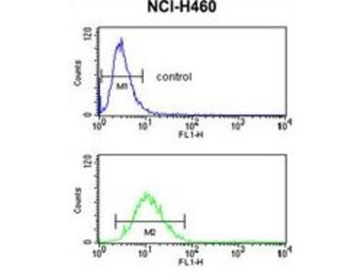 Anti-SLC25A17 antibody, N-term