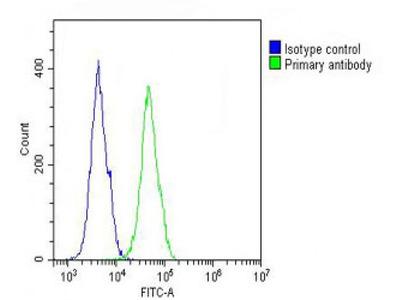 Anti-COL17A1 antibody, Internal
