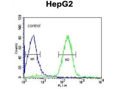Anti-alpha 1 Acid Glycoprotein antibody, C-term