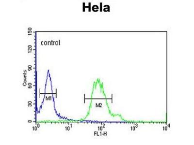 Anti-GABARAPL1 antibody
