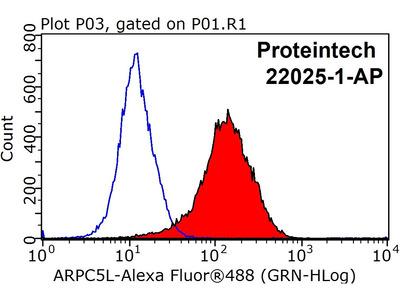 ARPC5L Antibody