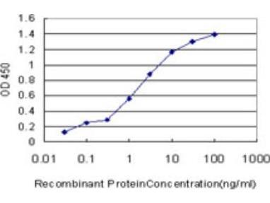cGK1 / PRKG1 Antibody (2B3)