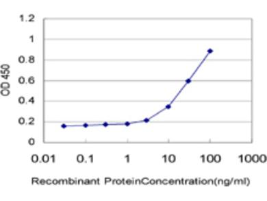 CXCL12 / SDF-1 Antibody (1B2)