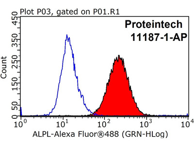 ALPL antibody