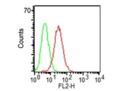 anti CD34