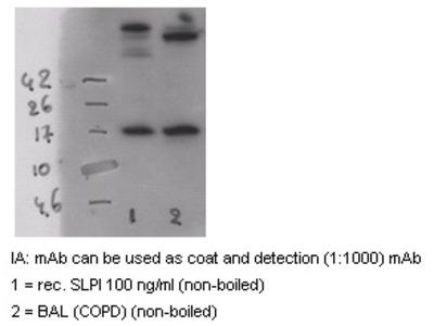 anti Antileukoproteinase / ALP