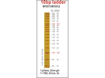 10bp ladder
